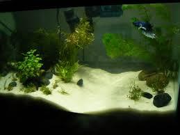 mebbid u0027s 10g planted betta build progress aquarium advice