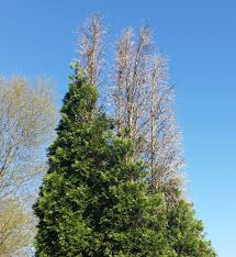 davey tree service south detroit michigan