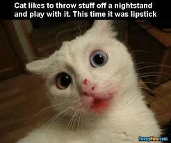 Cat Meme Pictures - funny cat meme