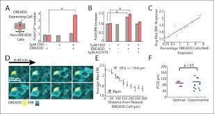 paracrine communication maximizes cellular response fidelity in