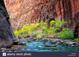 fall colored trees in river zion national park