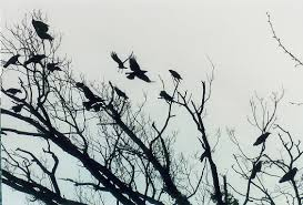 tree of crows by silvercrow on deviantart