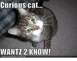 Grumpy Cat Coma Meme - curious cat wantz 2 know lcanhascheezeurgercoma meme on me me