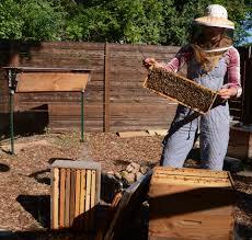 mint central texas gardener