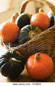 ornamental squash stock photo royalty free image 31510165 alamy