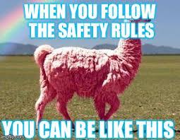 Alpaca Sheep Meme - llamas are koo imgflip