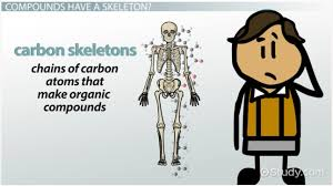 what is a carbon skeleton video u0026 lesson transcript study com