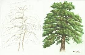 tutorial menggambar orang dengan pensil cara menggambar pohon pinus dengan pensil warna teknik menggambar
