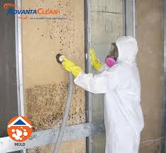 mold removal milwaukee wi mold remediation advantaclean