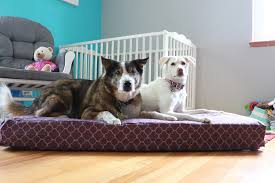 Dog Beds With Cover Upcycle Hack Turn A Crib Mattress Into A Dog Bed With Molly Mutt
