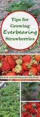 98 besten gardening goodness bilder auf pinterest gardening