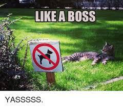 Yasssss Meme - a like a boss yasssss meme on me me