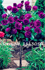 compare prices on ornamental plants online shopping buy low price
