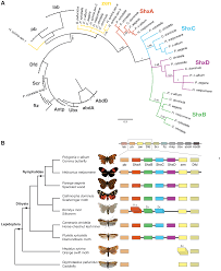 ancient expansion of the hox cluster in lepidoptera generated four