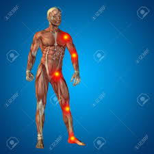 Human Male Anatomy Conceptual 3d Human Man Anatomy Joint Pain Body On Blue Background