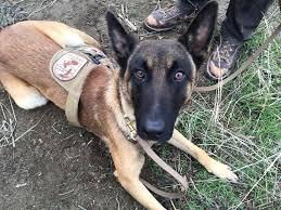 belgian shepherd oregon new wildlife officer speaks dutch has four legs and a tail