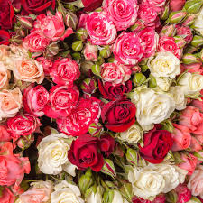 multicolor roses multicolor roses bouquet stock photo image of floral 46156788