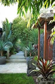 Tropical Plants For Garden - stylish 1000 ideas about tropical gardens on pinterest tropical