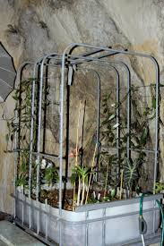 49 best aquaponics images on pinterest gardening aquaponics