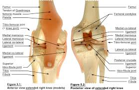 anatomy u0026 physiology of yoga yoga synergy