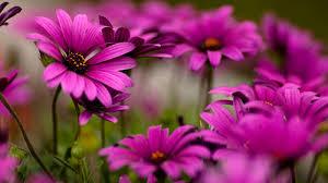 Nice Flowers World U0027s Top 100 Beautiful Flowers Images Wallpaper Photos Free