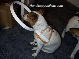 Halo For Blind Dogs Hoop Harness For Blind Dogs