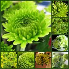 types of flowers pictures and names and meanings beautiful baby
