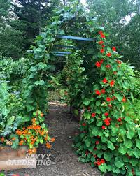 vertical vegetable gardening pole bean tunnels