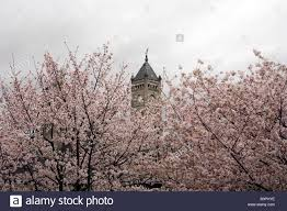 tower of union station in nashville tennessee with blooming trees