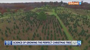 msu researching how to grow perfect christmas tree youtube