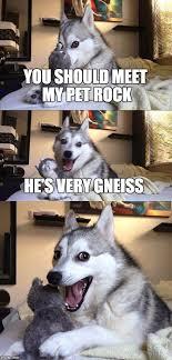 Pet Rock Meme - bad pun dog meme imgflip
