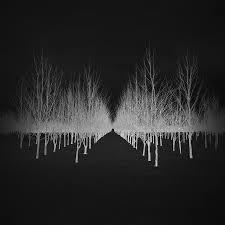 silver snowscapes snowscapes minimalism monochrome negatives