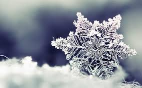 macro wonderful frozen snowflake hd winter wallpaper