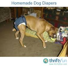 How To Comfort A Cat In Heat Best 25 Dog Diapers Ideas On Pinterest Dog Pants Typing Pad