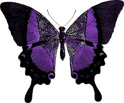 purple butterfly colorful free image on pixabay