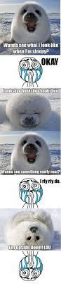 Baby Seal Meme - cute seal memes 12 pics