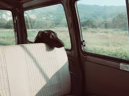 Window Seats For Dogs - tips for improving summer travel with your pet canna pet