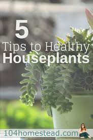 your guide to healthy houseplants
