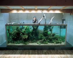 Best Beautiful Aquariums Images On Pinterest Planted Aquarium - Home aquarium designs