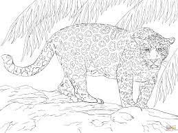 jaguar coloring page glum me