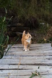 Sassy Cat Meme - sassy cat walking over bridge photoshopbattles