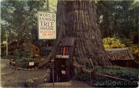 famous tree houses world famous tree house laytonville ca