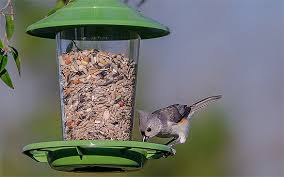 here u0027s what to feed your summer bird feeder visitors all about birds