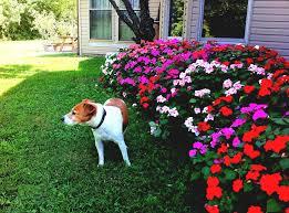flower garden ideas beginners list biz