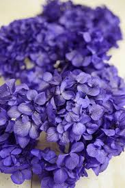 purple hydrangea hydrangeas flowers dried preserved silk
