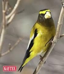 garden treasures 17 lb black oil sunflower bird seed bird