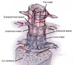 Neck Cross Sectional Anatomy Spinal Cord Stimulation Technique Approach Considerations Device