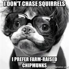 Hipster Dog Meme - hipster dog meme 2 meme generator