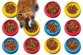 the chemistry of kibble popular science