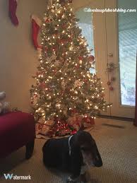christmas live laugh bark at everything